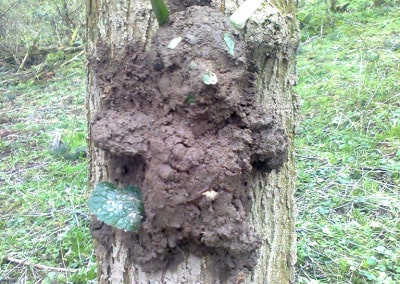 Forest Schools 2011 30