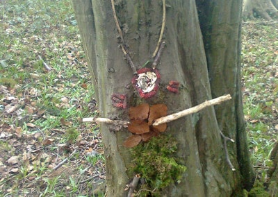 Forest Schools 2011 9