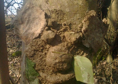 Forest Schools 2011 20