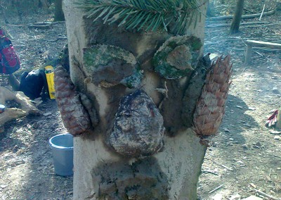 Forest Schools 2011 21