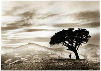 Main Photo - Lonely Tree Llanfyllin 1993