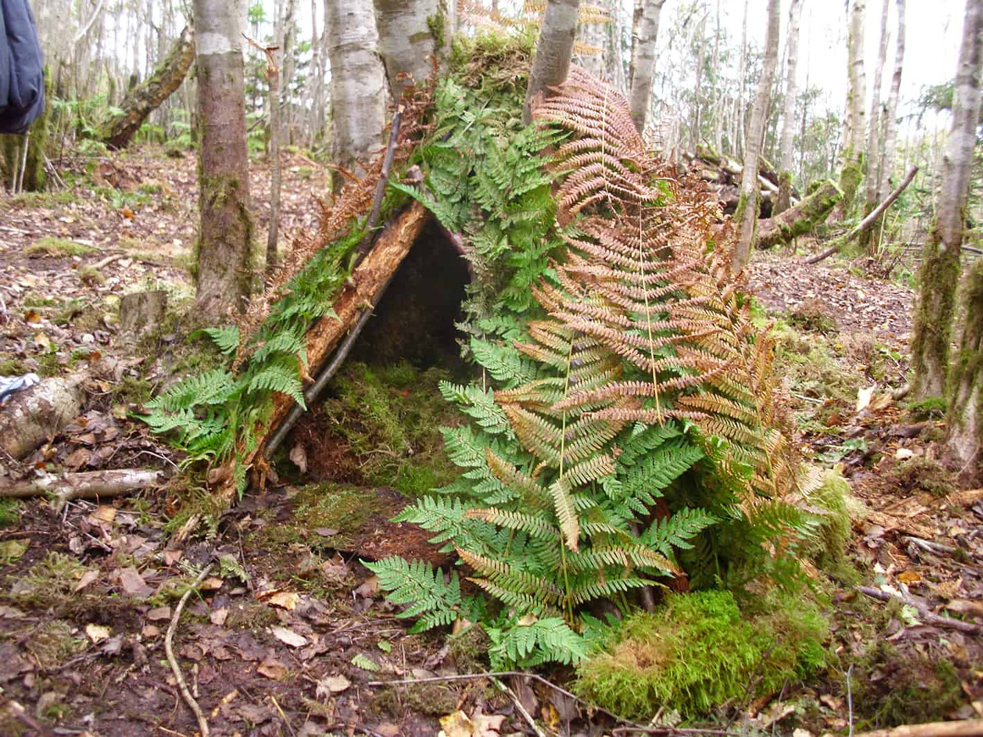 Image result for Forest schools